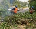 Gagnoa : L'Ageroute débroussaille des kilomètres de routes bitumées